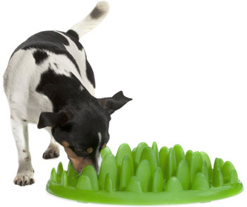 Dog Food Bowls for Fast Eaters - photo#19