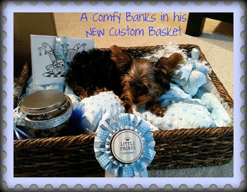 New Puppy Welcome Home Gift Baskets And Treats